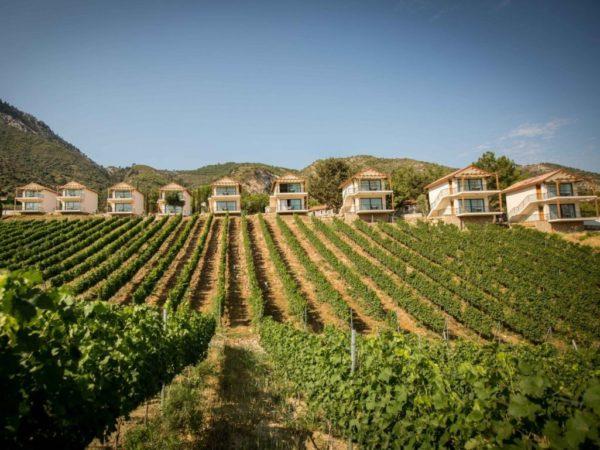 экскурсия северный кипр дегустация вин