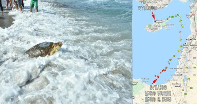 Знаменитая черепаха Астрид и ее путь