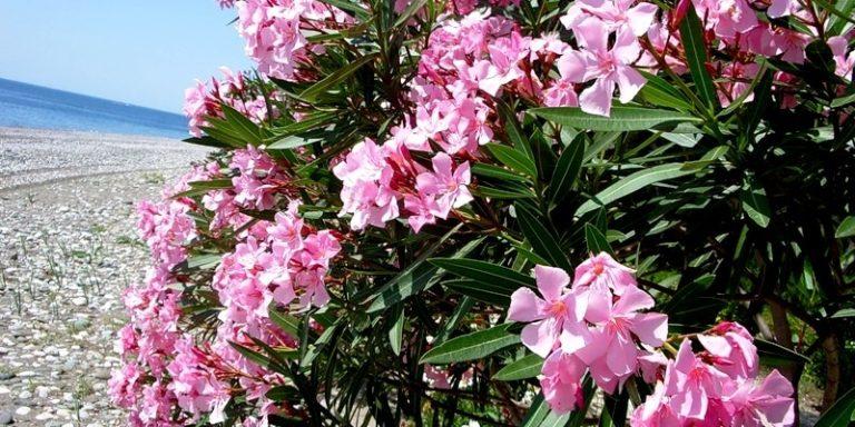 Природа: Растения Северного Кипра