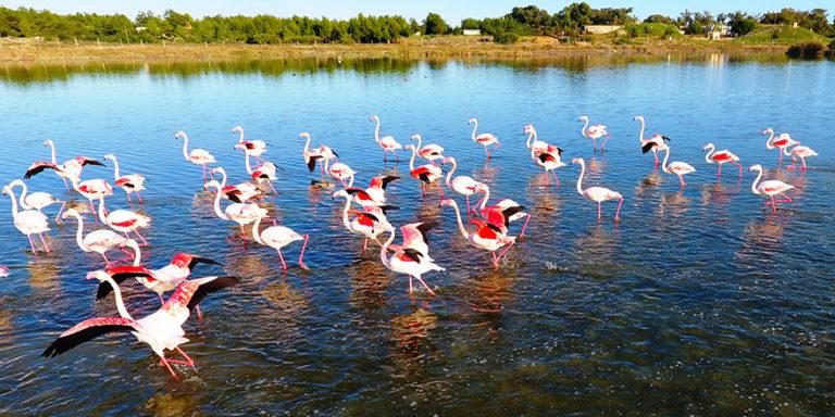 Где посмотреть на фламинго?