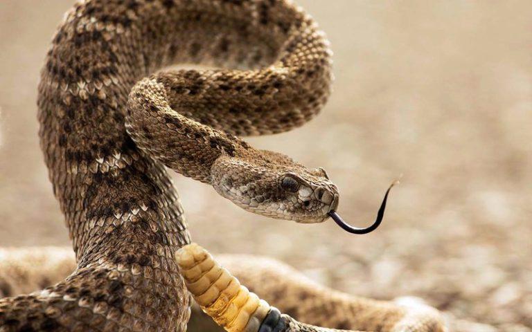 Ядовитые змеи Северного Кипра: что делать если укусила змея?