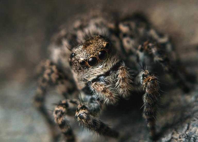 Опасные пауки острова