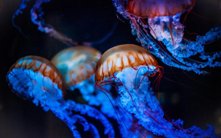 Осторожно!!!Медузы в море