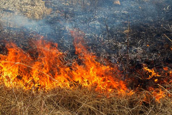 Пожар в Бафре